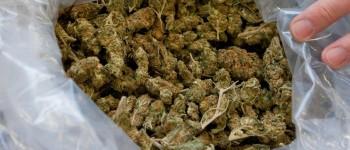 21-годишен кумановец ќе одговара за поседување марихуана