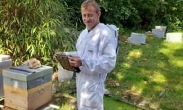 Произведува мед од марихуана: Пчелите собираат смола од канабисот (видео)