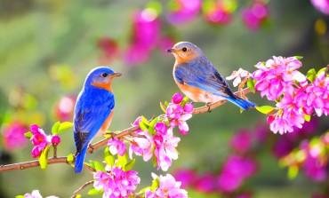 Започна пролетта - денес е пролетната рамноденица