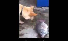 Дали е ова кучето со најголемото срце на светот? (видео)