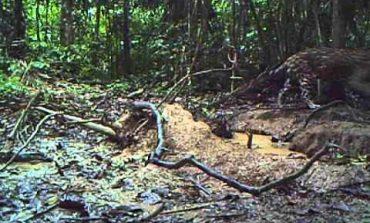 Што може да се види длабоко во дождовните шуми на Амазон? (видео)