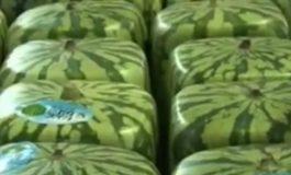 Коцкастите лубеници го преплавуваат светскиот пазар (видео)