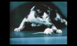 Воен експеримент: Како мачка под дејство на ЛСД реагира на глушец? (видео)
