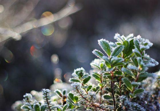 Минусни утрински температури, до 12 степени во текот на денот