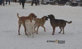 Милион денари Куманово троши за заловување на кучињата скитници