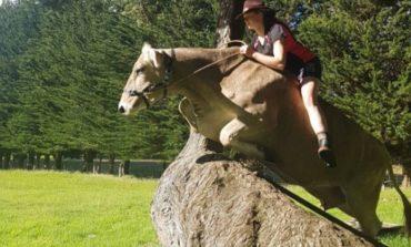 Не ву купиле пони, па краву гу издресирала како коња (видео)