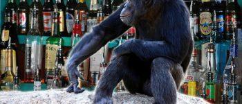Алкохолот го измислиле животните, а не луѓето (видео)