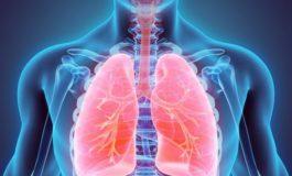 ГОЛЕМО ОТКРИТИЕ: Белите дробови не служат само за дишење (видео)