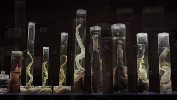 Верувале или не, постои Музеј на пениси (видео)
