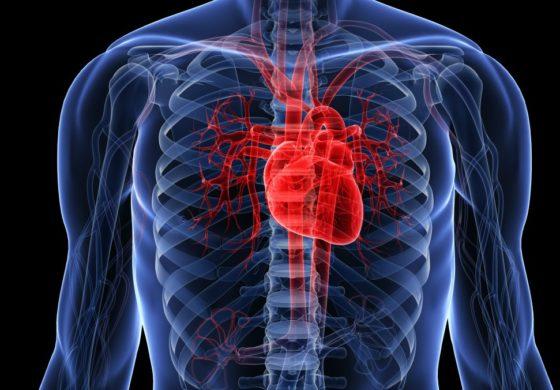 Проверете во домашни услови дали имате здраво срце