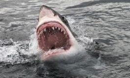 Сите се плашат од ајкули, но ова е најсмртоносното животно: Годишно убива 725.000 луѓе (видео)