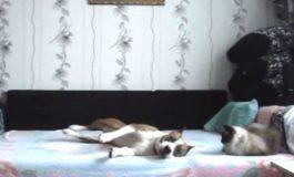 Што прави вашето куче кога ќе го оставите дома само? (видео)