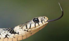 НАРОДНИ ВЕРУВАЊА: Ако видите змија во вашиот двор немој да ја убиете