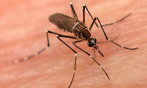 Лек против убод од комарец