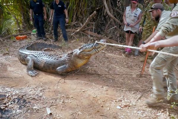 ВОЗНЕМИРУВАЧКО: Крокодил зграби маж, го врати телото кога врачар фрли клетва врз него