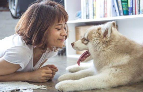 ПРЕСМЕШНО: Вака изгледа кога кучето е љубоморно (видео)