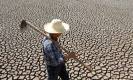 Појава на глад во Северна Кореја, сушата го уништи кревкото земјоделство