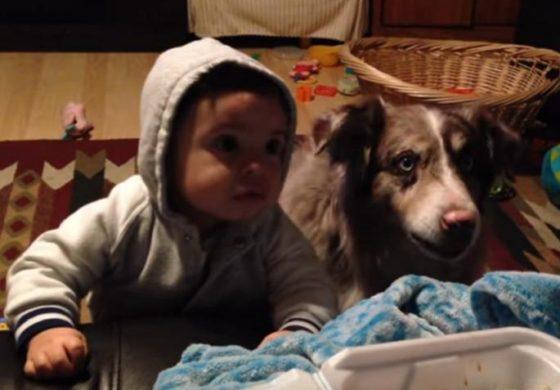 """АПСОЛУТЕН ХИТ: Мајка го учи бебето да каже """"мама"""", но кучето научи побргу (видео)"""