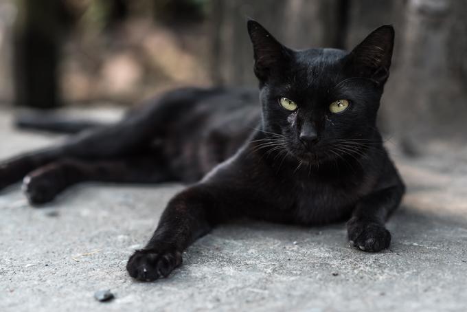 Зошто се верува дека црната мачка на пат носи несреќа?