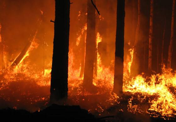 Шумски пожар беснееше во Матечје