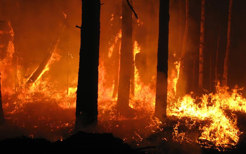 Шумски пожар беснеел во Липково, регистрирани уште седум помали