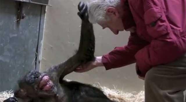 ЕМОТИВЕН МОМЕНТ: Шимпанза на смртна постела се поздравува за последен пат (видео)