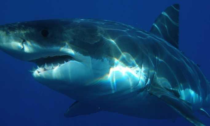 Со голи раце се спаси од ајкула (видео)
