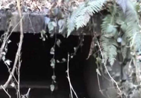 Србинка со години живее под земјата, но никој не ја знае причината за тоа