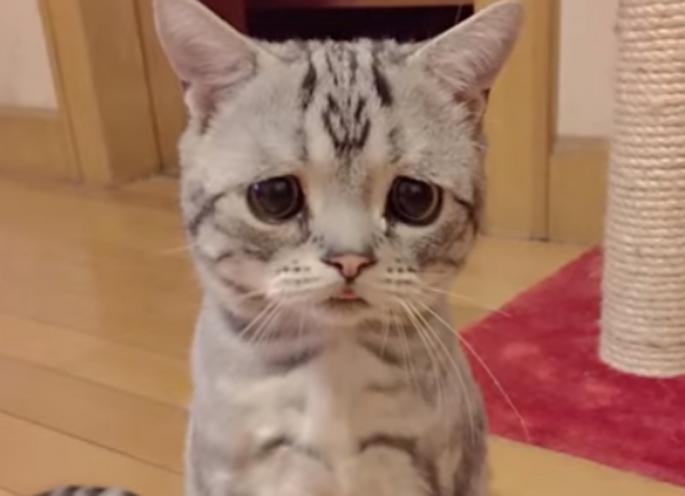 Запознајте ја Луху, најтажната мачка во светот (фото+видео)