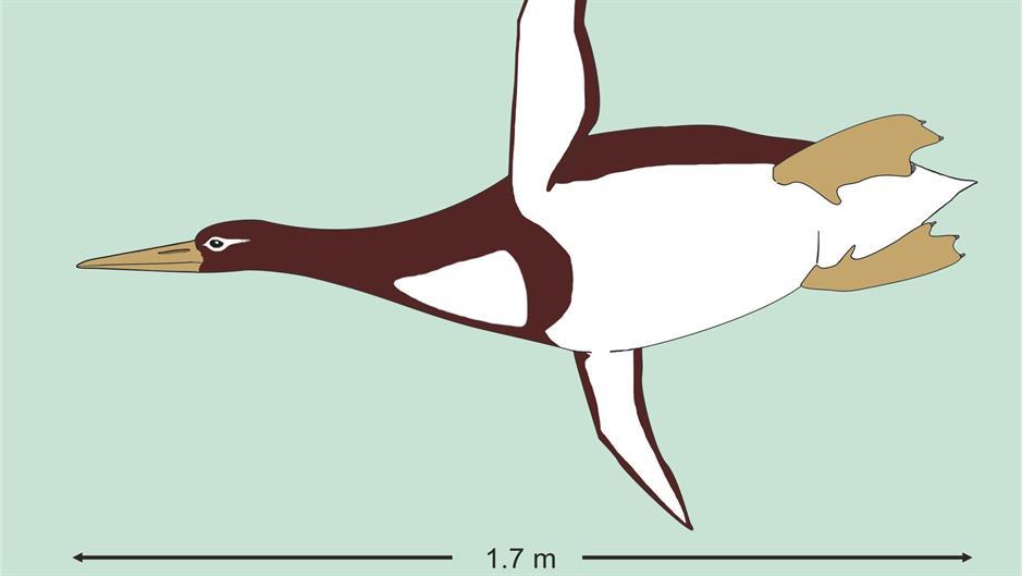 На земјата некогаш шетале џиновски пингвини