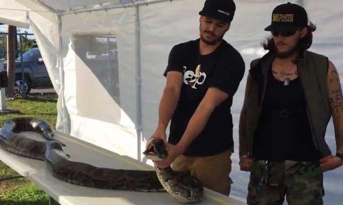 Уловил питон тежок 60 килограми, а долг пет метри (видео)