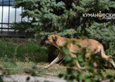 Дете каснато од куче скитник во училишен двор во Куманово
