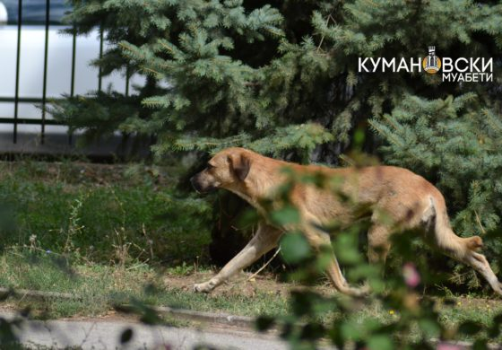 Заврши тендерот на општина Куманово за заловување на кучиња скитници