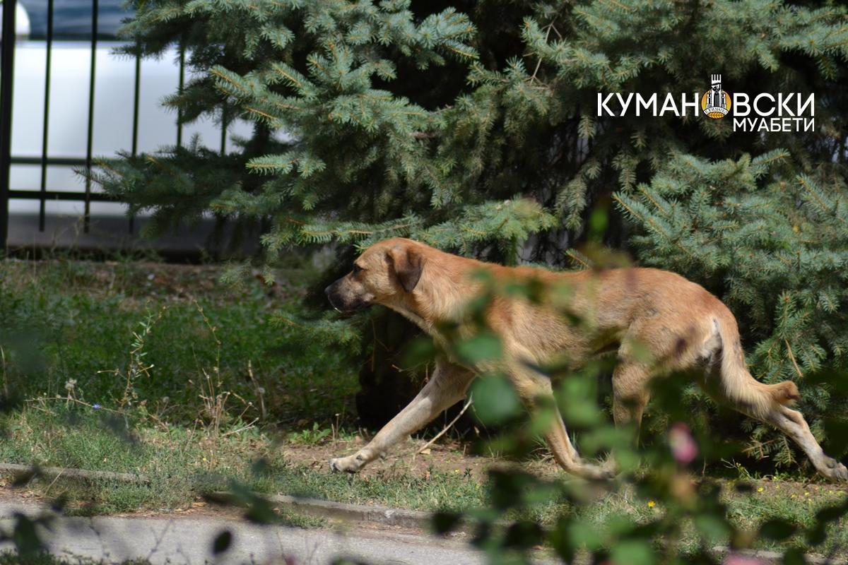 Се вакцинираат домашни миленици против беснило во Куманово