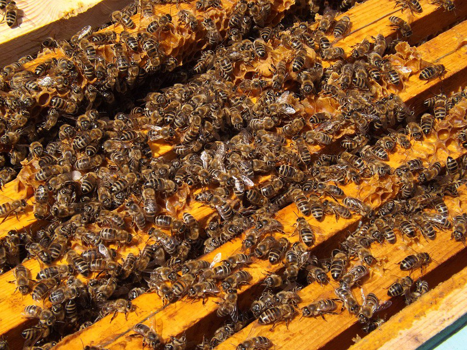 ЗАСТРАШУВАЧКО: Од ѕидовите на домот започнал да тече мед (видео)