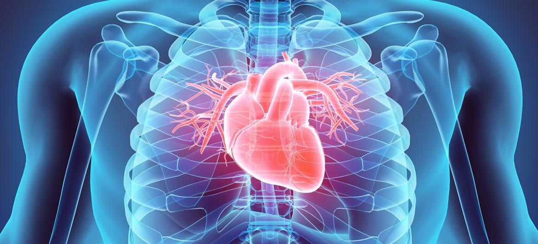 Љубопитни факти за срцето