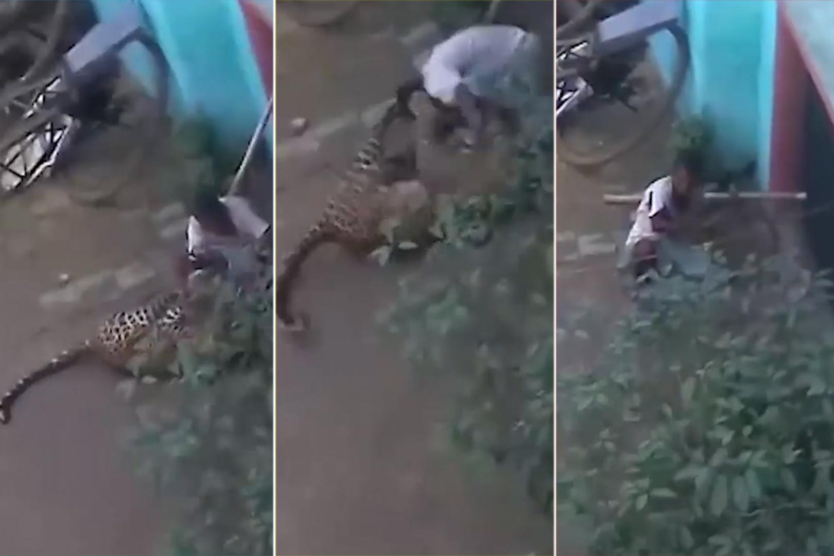 Леопард влезе во селото и започна да напаѓа луѓе, 60-годишник го совлада со голи раце (видео)