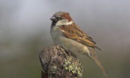НУАЧНИЦИТЕ ПРЕДУПРЕДУВААТ: Глобланото затоплување ги загрозува птиците