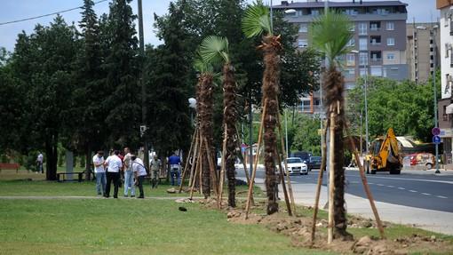 31 милиони евра потрошени за палмите од кои ниту една не преживеала