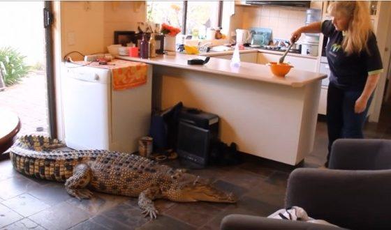 Живее со 33 домашни миленици од кои 5 можат цела да ја проголтаат (ВИДЕО)