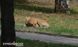 Акција за вдомување кучиња скитници на кумановскиот плоштад