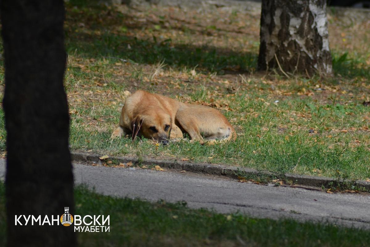 Акција за заловување кучиња скитиници во Куманово
