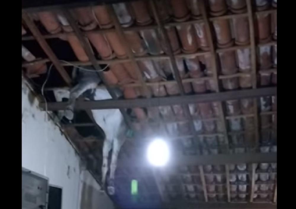 Мирно си седеа дома, а тогаш низ кровот им слета магаре (ВИДЕО)