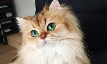 Оглас за работа од соништата за љубителите на мачките