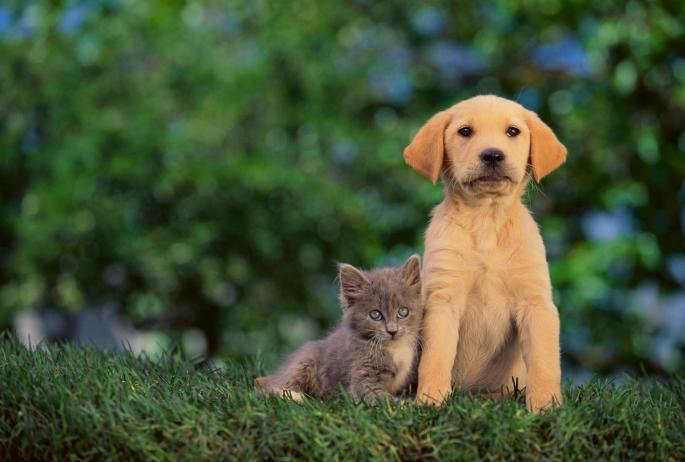 Зошто има толку многу раси кучиња, а малку раси мачки?
