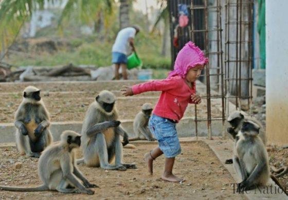 Негоивте другари се мајмуните: Секое утро го будат за градинка и се играат со него (ВИДЕО)