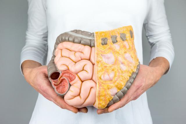 Седум органи без кои нашето тело може да функционира