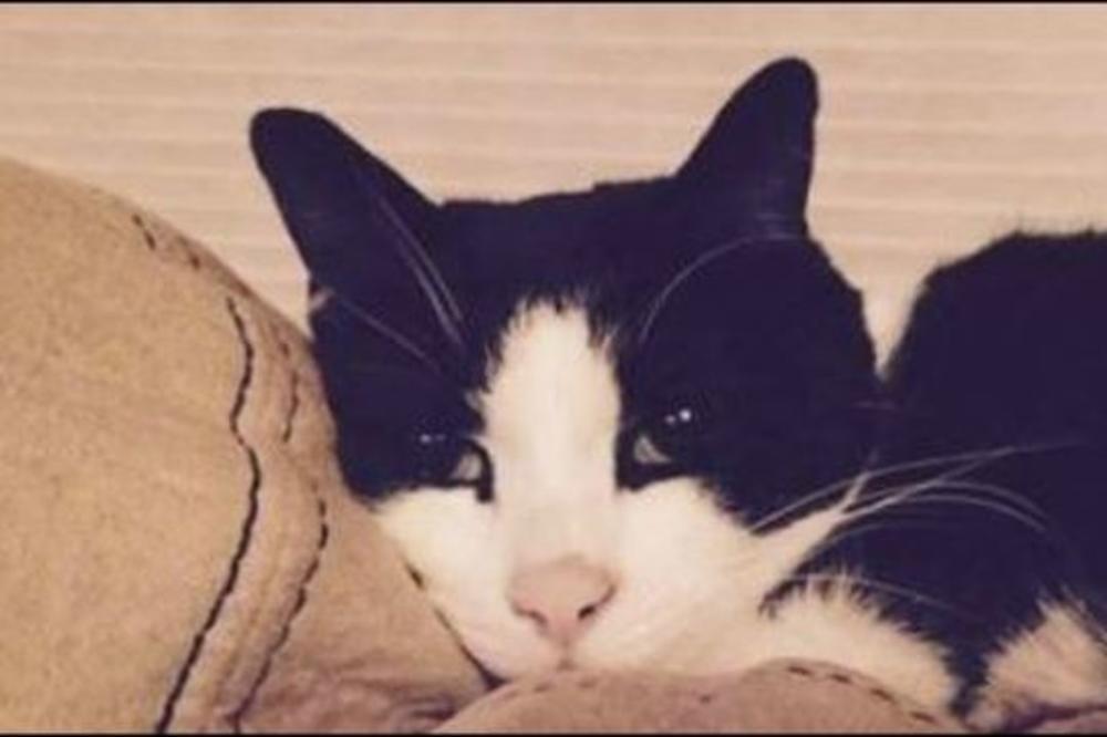 НОВИОТ ХЕРОЈ: Мачка спаси семејство од сиугрна смрт