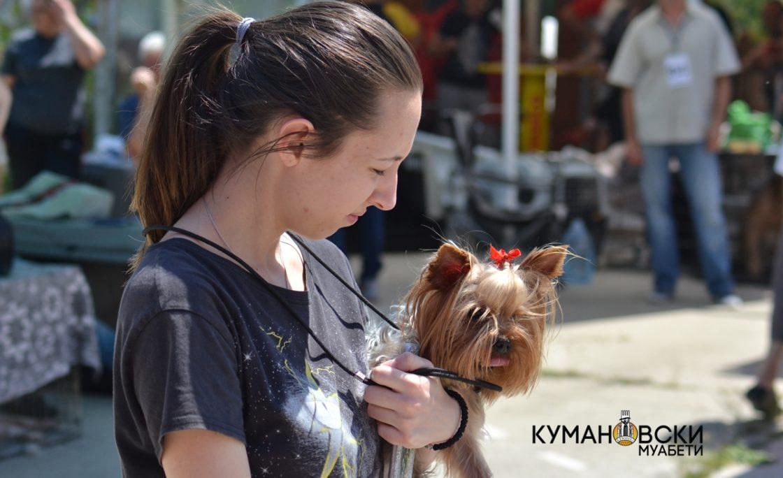 (ГАЛЕРИЈА) Изложба на расни кучиња во Куманово