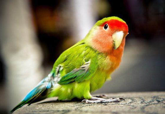 ХИТ ВО ГЕРМАНИЈА: Се скарал со папагалот, реагирала полицијата